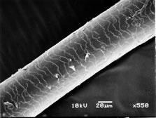 electron_microscope_11.jpg