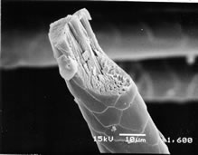 electron_microscope_3.jpg