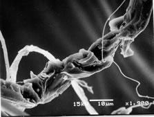 electron_microscope_5.jpg