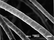 electron_microscope_7.jpg